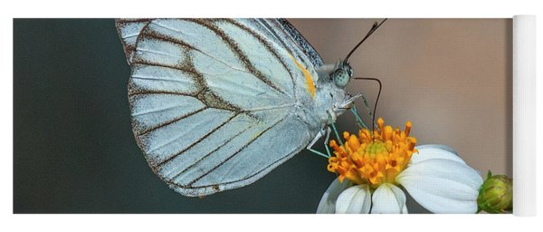 Striped Albatross Butterfly Dthn0209 Yoga Mat