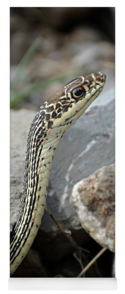Striped Whipsnake, Masticophis Taeniatus Yoga Mat