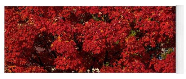 Sugar Maple In Autumn Yoga Mat
