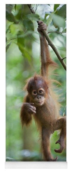 Sumatran Orangutan Pongo Abelii One Yoga Mat