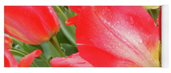 Sun Lights Tulips After Spring Rain Yoga Mat