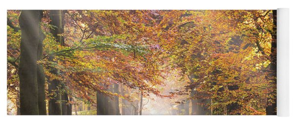 Yoga Mat featuring the photograph Sunbeams In A Forest In Autumn by IPics Photography