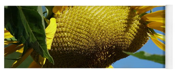 Sunflower, Mammoth With Bees Yoga Mat