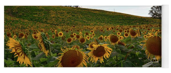 Sunflowers Fields  Yoga Mat