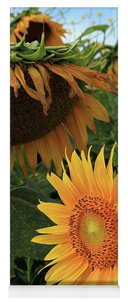 Sunflowers Past And Present Yoga Mat