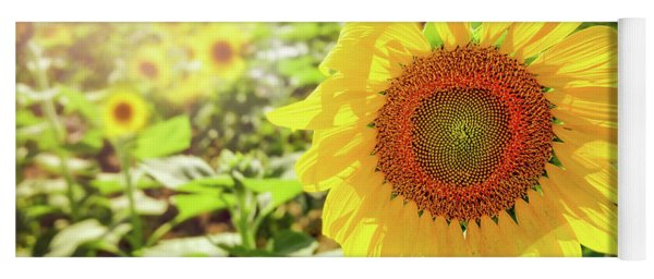 Sunflowers Yoga Mat