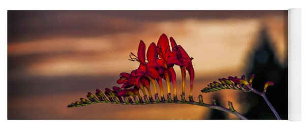 Sunset Crocosmia Yoga Mat