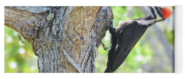 Surprised By Pileated Yoga Mat