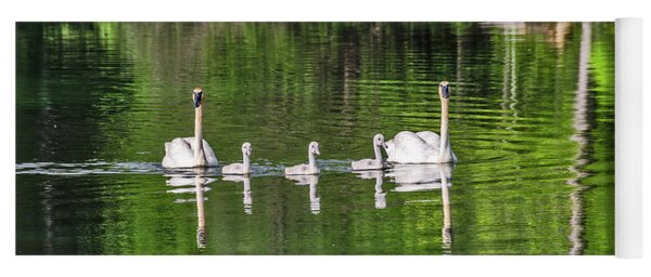 Swan Family With Triplets Yoga Mat
