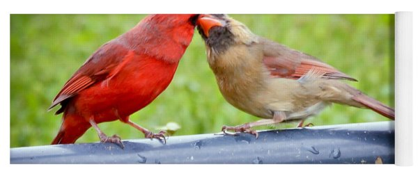 Sweet Cardinal Couple Yoga Mat