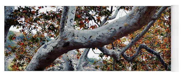 Sycamore Tree Abstraction Yoga Mat