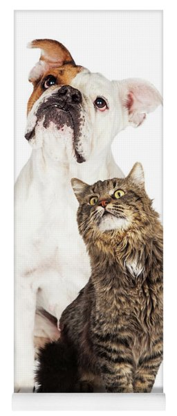 Tabby Cat And Bulldog Together Looking Up Yoga Mat