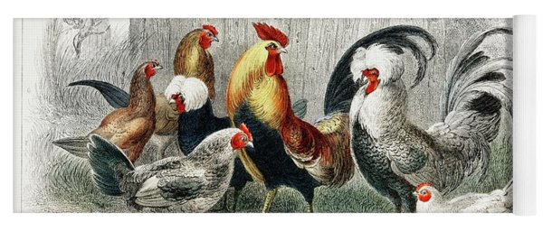 Taps And Hens From A History Of The Earth And Animated Nature Yoga Mat