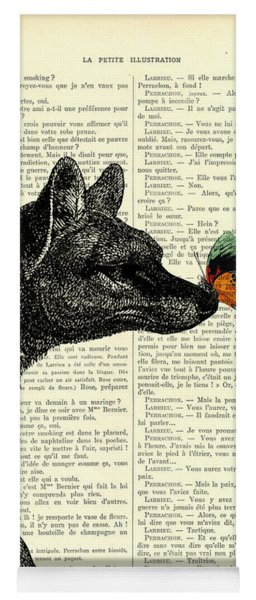 Tasmanian Tiger And Orange Butterfly Antique Illustration On Dictionary Page Yoga Mat
