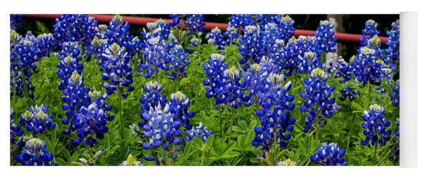 Texas Bluebonnets In Ennis Yoga Mat