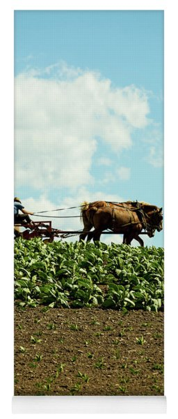The Amish Farmer With Horses In Tobacco Field Yoga Mat