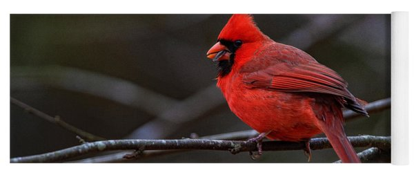 The Cardinal And The Sunflower Seed Yoga Mat