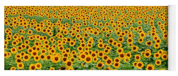 The Field Of Suns Yoga Mat