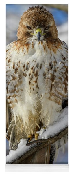 The Look, Red Tailed Hawk Yoga Mat