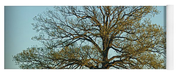 The Mighty Oak In Spring Yoga Mat