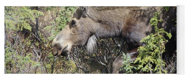 The Moose Yoga Mat