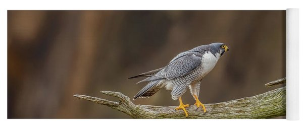 The Peregrine Falcon Yoga Mat