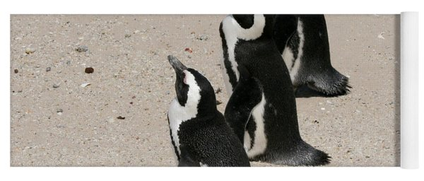 Three African Penguins Yoga Mat