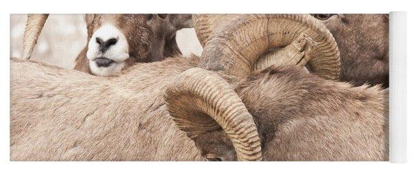 Three Bighorn Rams Yoga Mat