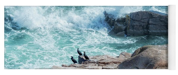 Three Cormorants At Monument Cove, Acadia National Park Yoga Mat