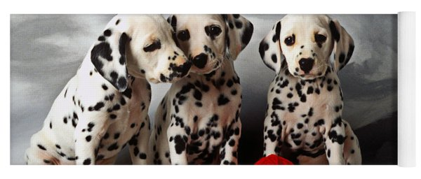 Three Dalmatian Puppies  Yoga Mat