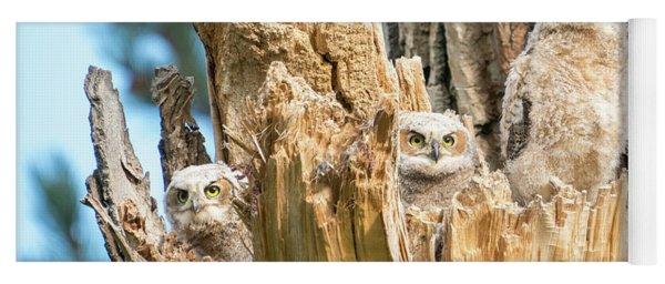 Three Great Horned Owl Babies Yoga Mat