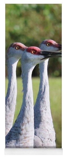 Three Sandhill Cranes On Alert Yoga Mat