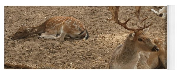 Three Deer Resting Yoga Mat
