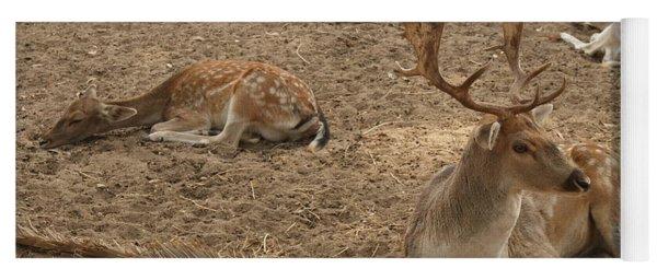 Three Deer Resting Yoga Mat