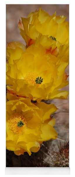 Three Yellow Cactus Flowers Yoga Mat
