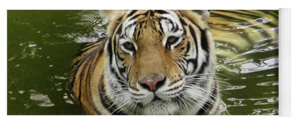 Yoga Mat featuring the photograph Tiger In The Water by Pamela Walton