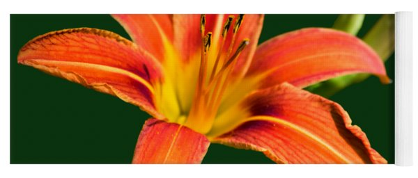 Yoga Mat featuring the photograph Tiger Lily by Christina Rollo