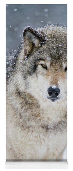 Timber Wolf Picture - Tw282 Yoga Mat
