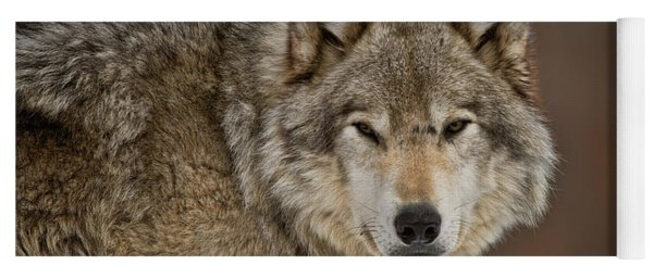 Timber Wolf Picture - Tw283 Yoga Mat