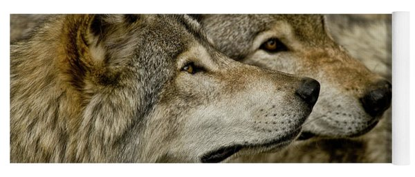 Timber Wolf Picture - Tw284 Yoga Mat