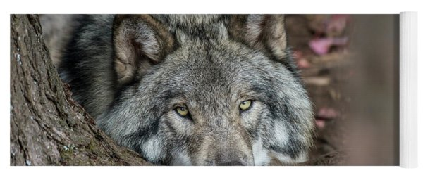 Timber Wolf Picture - Tw286 Yoga Mat