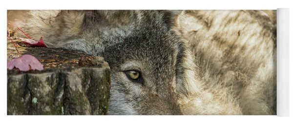 Timber Wolf Picture - Tw287 Yoga Mat