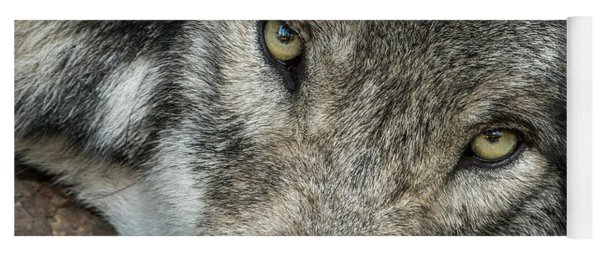 Timber Wolf Picture - Tw289 Yoga Mat