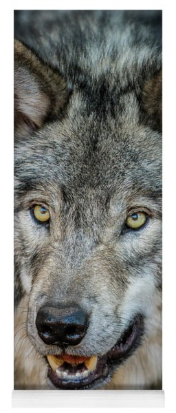 Timber Wolf Picture - Tw290 Yoga Mat