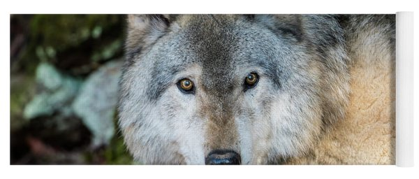 Timber Wolf Picture - Tw291 Yoga Mat