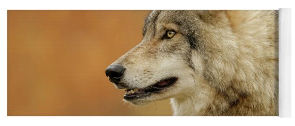 Timber Wolf Picture - Tw293 Yoga Mat