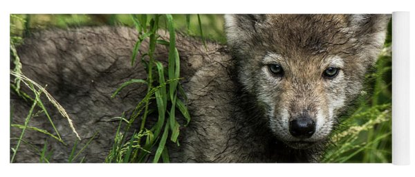 Timber Wolf Picture - Tw336 Yoga Mat