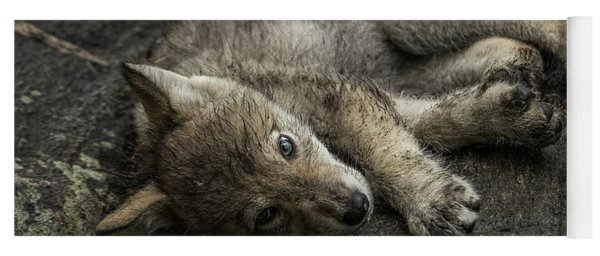 Timber Wolf Picture - Tw338 Yoga Mat