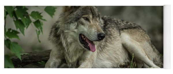 Timber Wolf Picture - Tw414 Yoga Mat