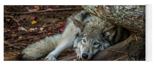 Timber Wolf Picture - Tw415 Yoga Mat
